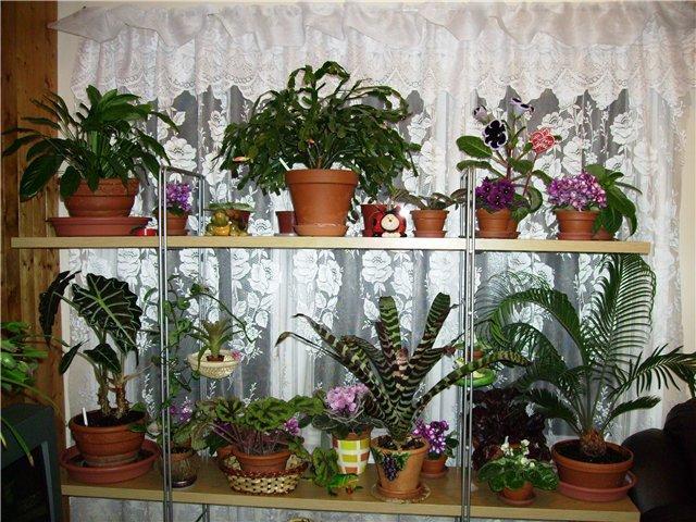 http://www.stihi.ru/pics/2009/09/06/2956.jpg