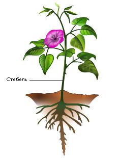 http://plantsblog.ru/wp-content/uploads/2012/05/organy-rastenij_1.jpg