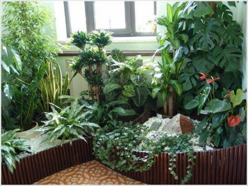 http://natural-medicine.ru/uploads/posts/2009-02/1234785844_z12.jpg