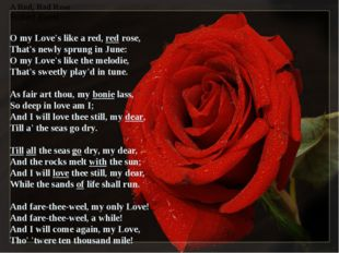A Red, Red Rose Robert Burns O my Lоve's like a red, red rose, That's newly s