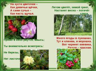 На кусте цветочки – Как девичьи щёчки, А сами сучья – Как пасть щучья. Летом