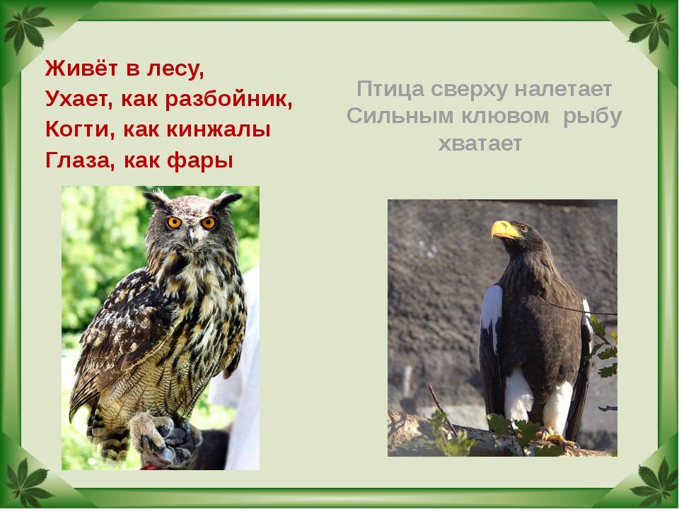Птица сверху налетает Сильным клювом рыбу хватает Живёт в лесу, Ухает, как ра...