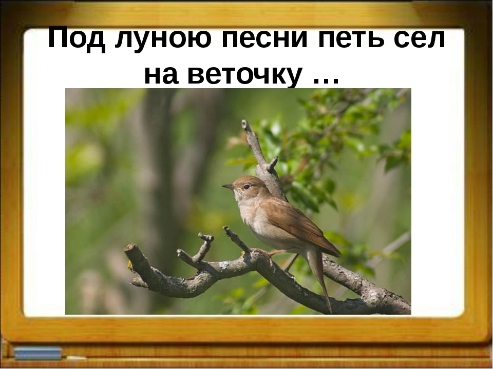 Под луною песни петь сел на веточку …