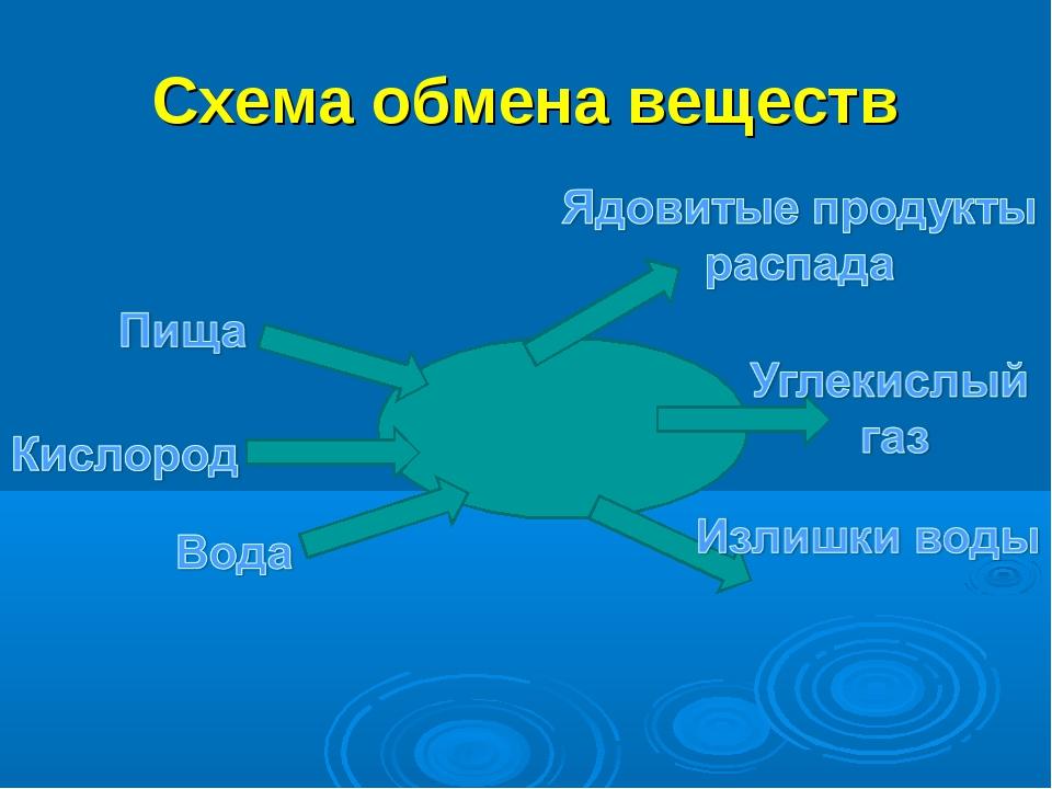 Схема обмена веществ