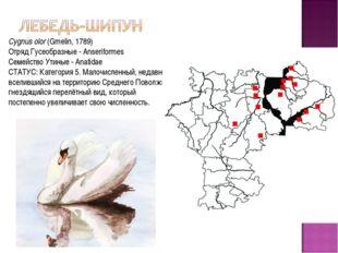 Cygnus olor(Gmelin, 1789) Отряд Гусеобразные - Anseriformes Семейство Утиные