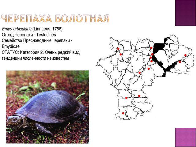 Emys orbicularis(Linnaeus, 1758) Отряд Черепахи - Testudines Семейство Прес...