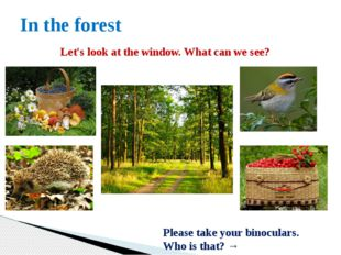 In the forest Let's look at the window. What can we see? Please take your bin