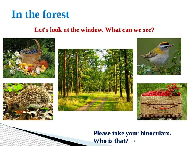 In the forest Let's look at the window. What can we see? Please take your bin...
