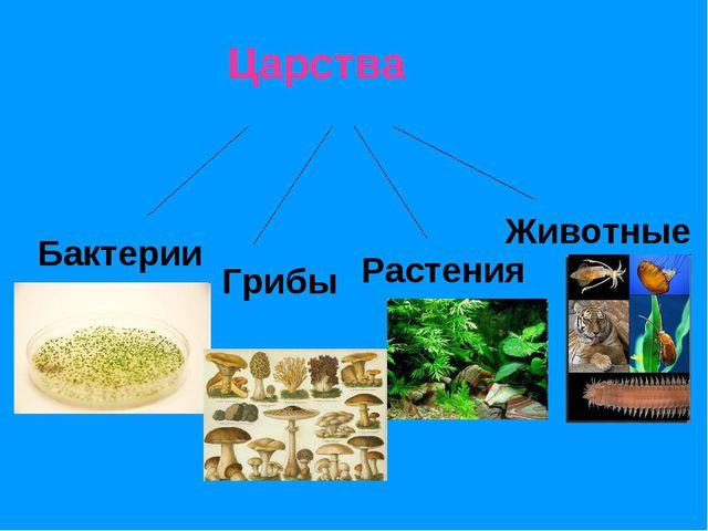 Царства Бактерии Грибы Растения Животные