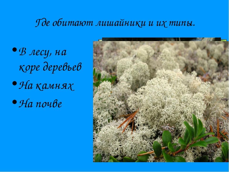 Где обитают лишайники и их типы. В лесу, на коре деревьев На камнях На почве