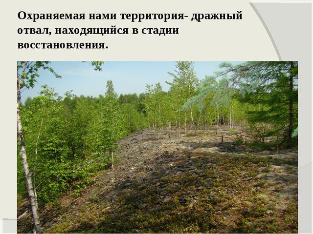 Охраняемая нами территория- дражный отвал, находящийся в стадии восстановления.