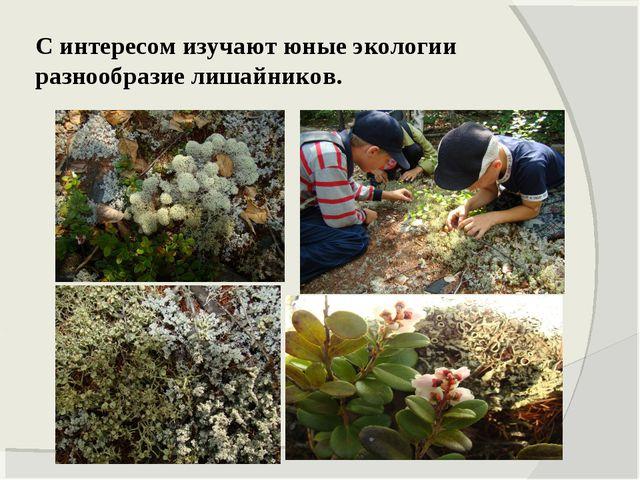 С интересом изучают юные экологии разнообразие лишайников.