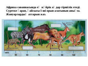 Африка саваннасында ең жүйрік аңдар тіршілік етеді. Суретке қарап, қайсысы І-