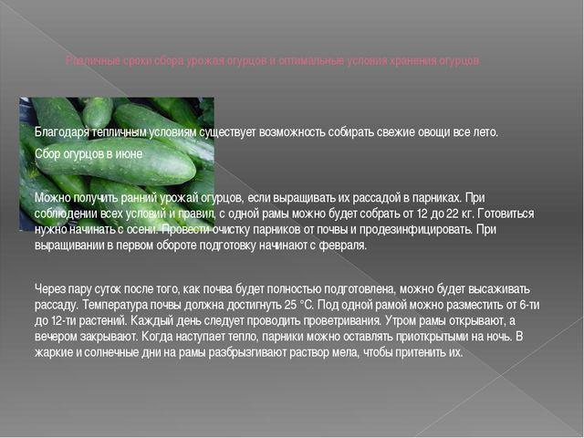 Различные сроки сбора урожая огурцов и оптимальные условия хранения огурцов Б...