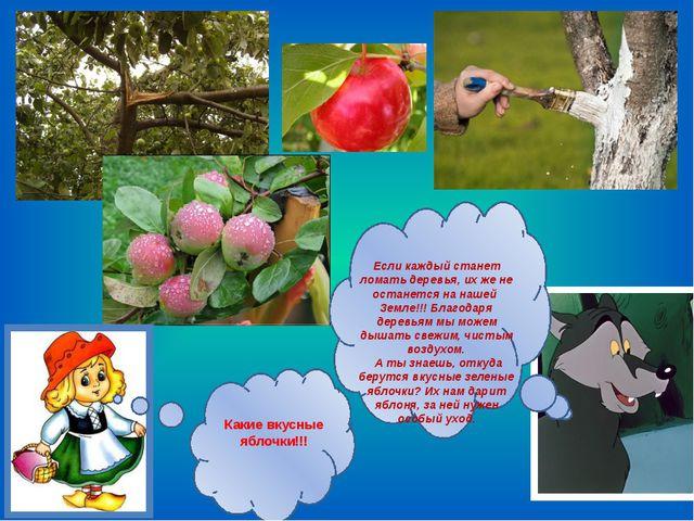 Какие вкусные яблочки!!! Если каждый станет ломать деревья, их же не останет...