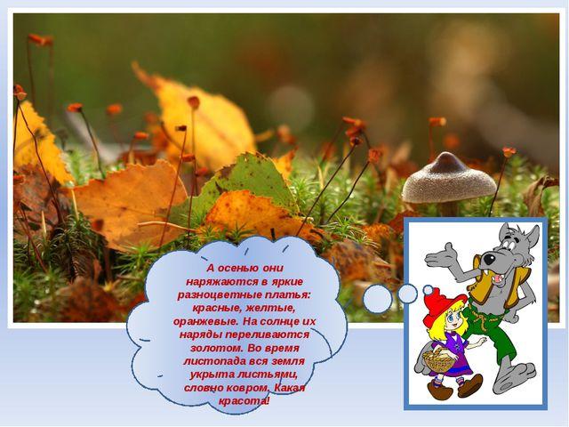 А осенью они наряжаются в яркие разноцветные платья: красные, желтые, оранже...