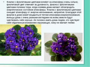 Фиалки с фиолетовыми цветками влияют на атмосферу очень сильно, фиолетовый цв