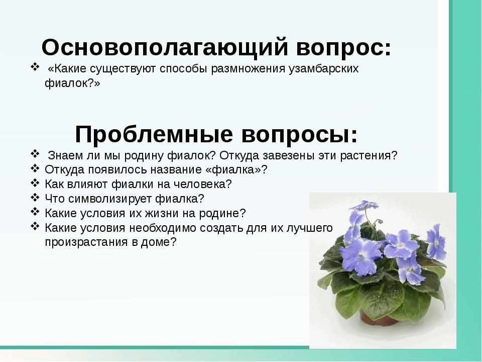 Основополагающий вопрос: «Какие существуют способы размножения узамбарских фи...