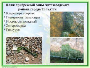 Пляж прибрежной зоны Автозаводского района города Тольятти Кладофора сборная