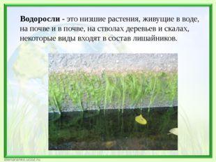 Водоросли - это низшие растения, живущие в воде, на почве и в почве, на ствол