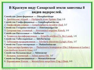 В Красную виду Самарской земли занесены 8 видов водорослей. Семейство Диносфе