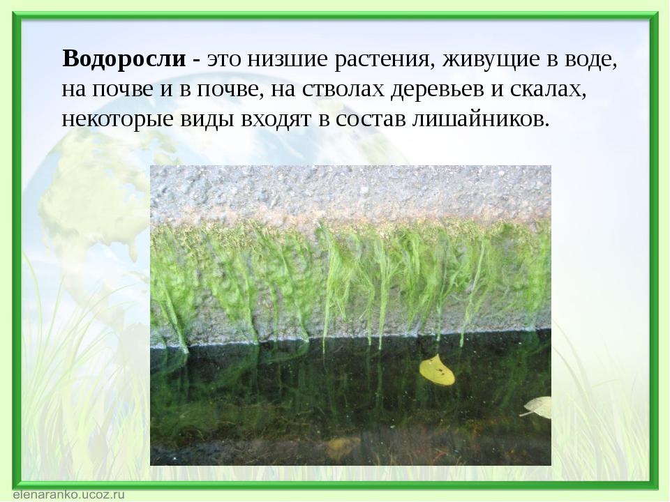 Водоросли - это низшие растения, живущие в воде, на почве и в почве, на ствол...