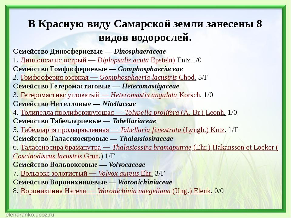 В Красную виду Самарской земли занесены 8 видов водорослей. Семейство Диносфе...