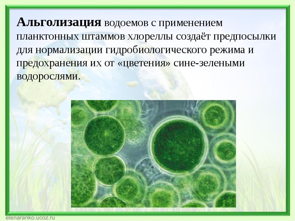 Альголизация водоемов с применением планктонных штаммов хлореллы создаёт пред...