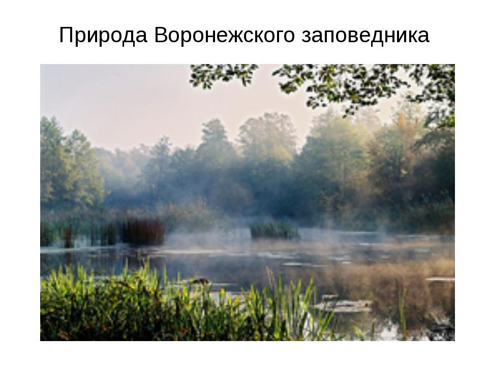 Природа Воронежского заповедника