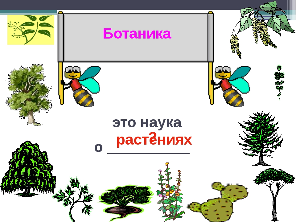 Что изучает ботаника картинки