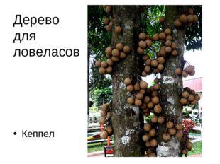Дерево для ловеласов Кеппел