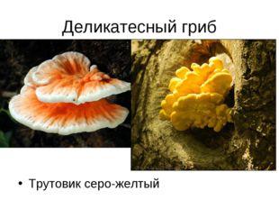 Деликатесный гриб Трутовик серо-желтый