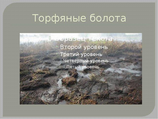 Торфяные болота