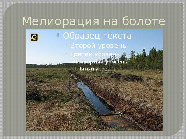 Мелиорация на болоте