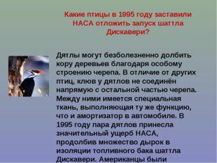 Какие птицы в 1995 году заставили НАСА отложить запуск шаттла Дискавери? Дятл
