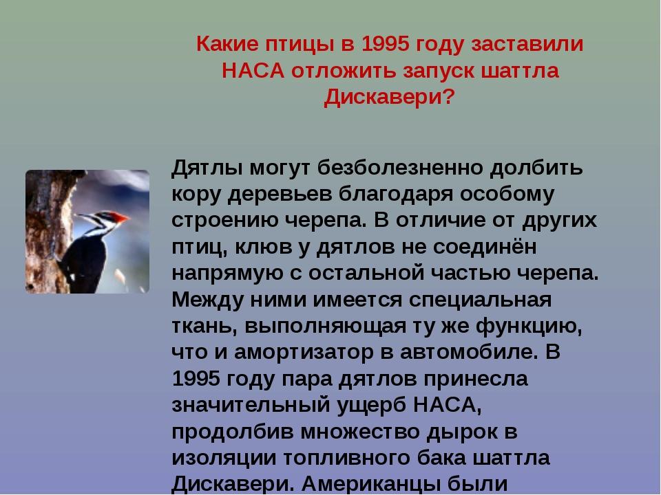 Какие птицы в 1995 году заставили НАСА отложить запуск шаттла Дискавери? Дятл...