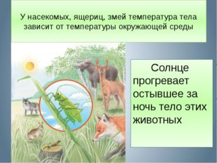 У насекомых, ящериц, змей температура тела зависит от температуры окружающей