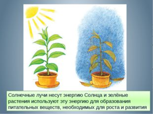 Солнечные лучи несут энергию Солнца и зелёные растения используют эту энергию