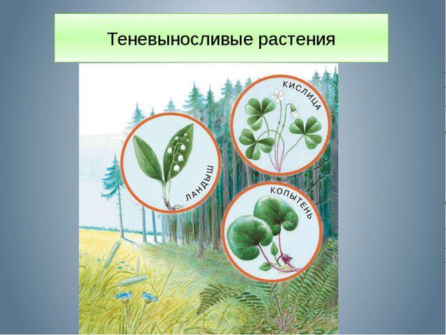 Теневыносливые растения