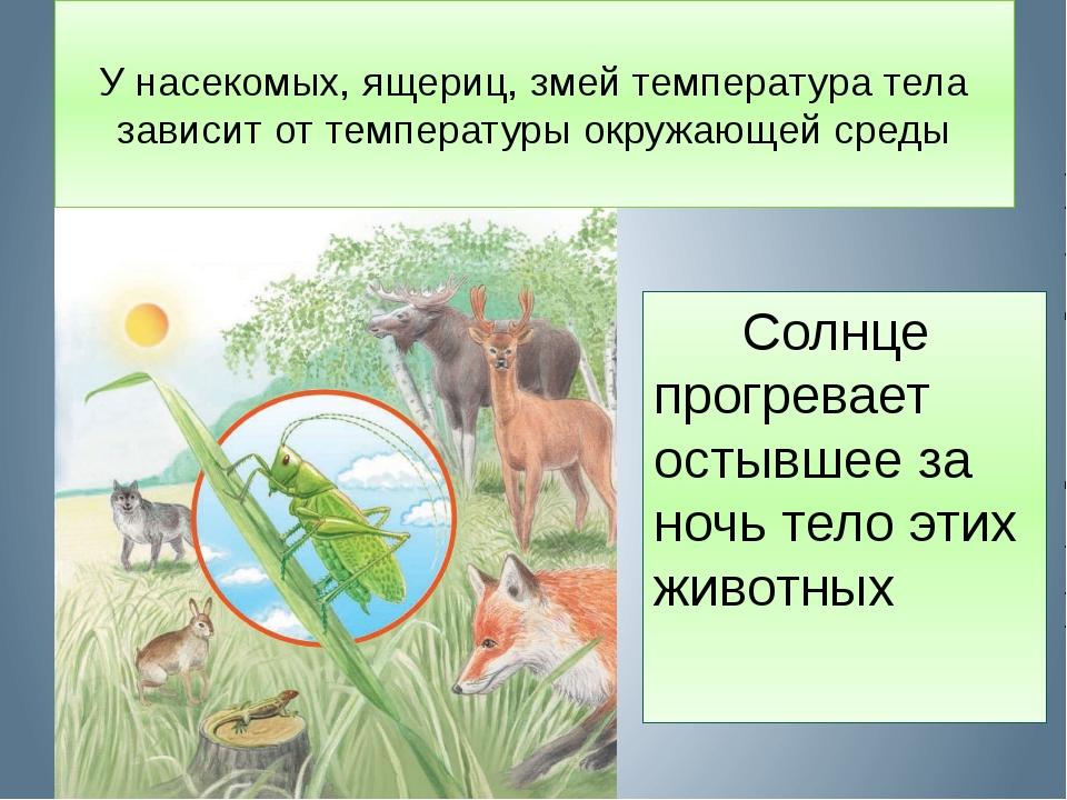У насекомых, ящериц, змей температура тела зависит от температуры окружающей...