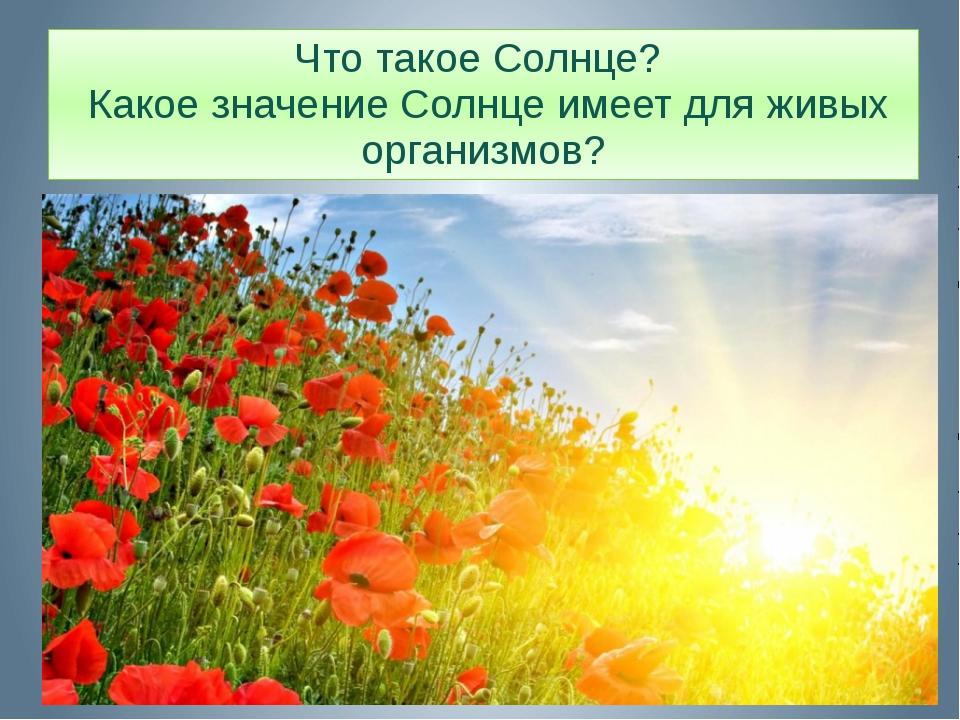 Что такое Солнце? Какое значение Солнце имеет для живых организмов?