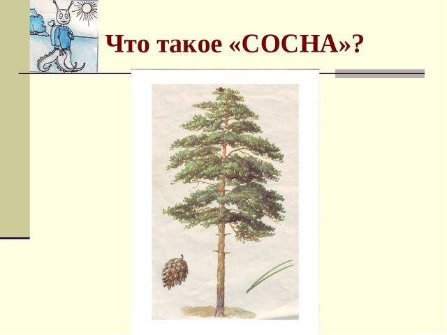 Что такое «СОСНА»?