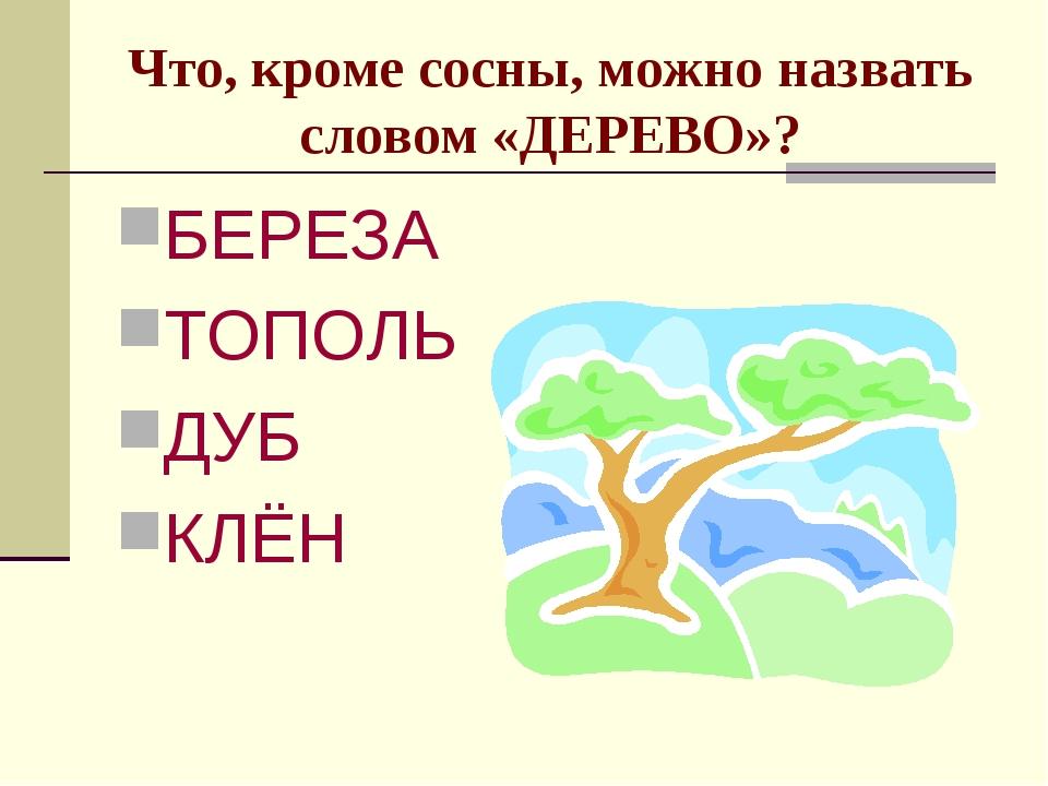 Что, кроме сосны, можно назвать словом «ДЕРЕВО»? БЕРЕЗА ТОПОЛЬ ДУБ КЛЁН