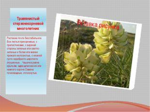 Травянистый стержнекорневой многолетник Растение почти бесстебельное. Все лис