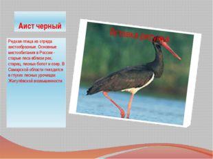 Аист черный Редкая птица из отряда аистообразные. Основные местообитания в Ро