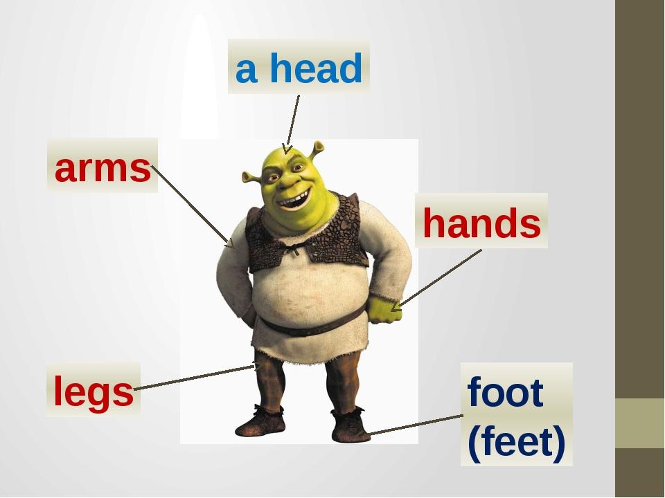 arms hands a head legs foot (feet)
