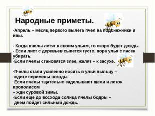 Народные приметы. Апрель – месяц первого вылета пчел на подснежники и ивы. -