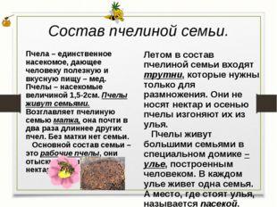 Состав пчелиной семьи. Летом в состав пчелиной семьи входят трутни, которые н