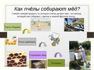 Как пчёлы собирают мёд? Пчела сборщик Пчела приёмщик Созревание мёда Пчеловод