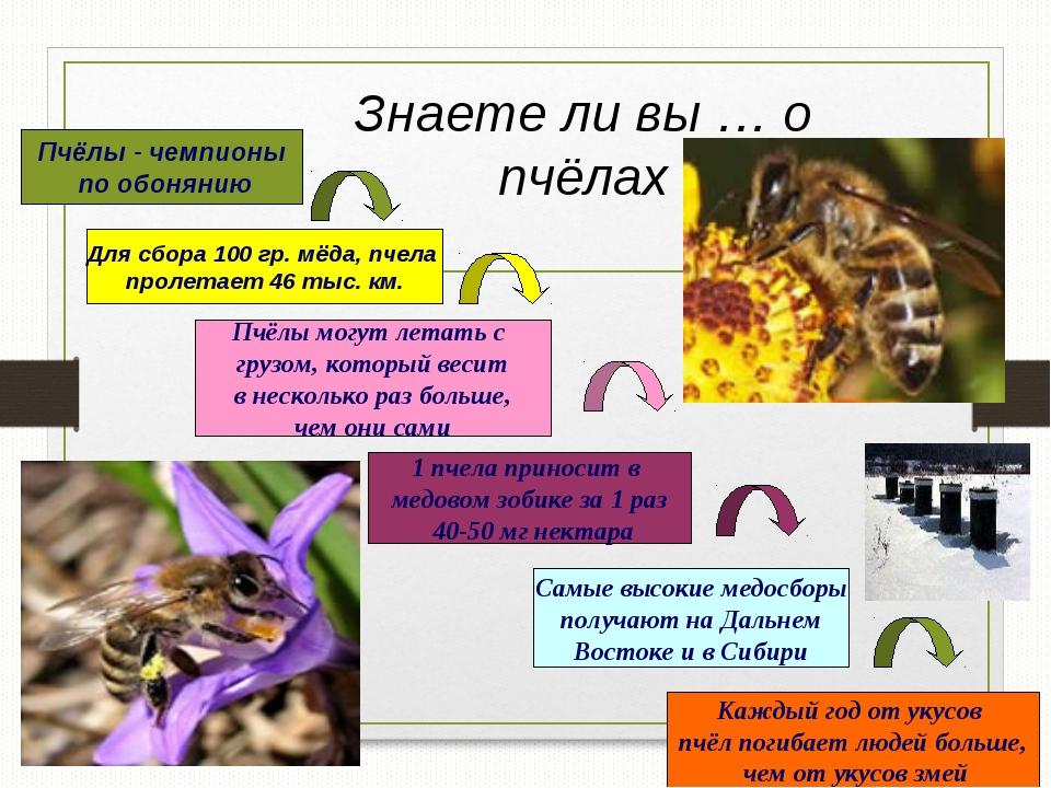 Знаете ли вы … о пчёлах Пчёлы - чемпионы по обонянию Для сбора 100 гр. мёда,...